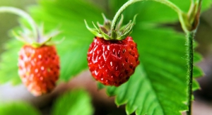 Strawberries: A Standout Superfruit