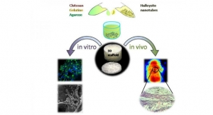 Clay Nanotube-Biopolymer Composite Scaffolds for Tissue Engineering