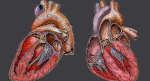 Challenges of Custom-Engineering Living Tissue to Fix a Heart