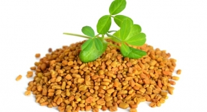 Fenugreek: An Herb To Watch