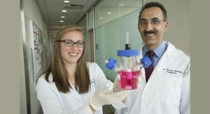 Stem Cells Engineered to Grow Cartilage, Fight Inflammation