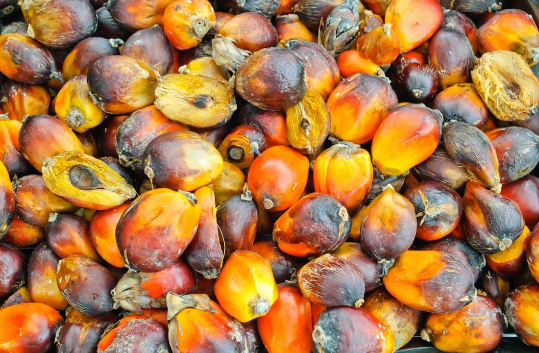 Henkel & BASF Support Indonesian Farmers