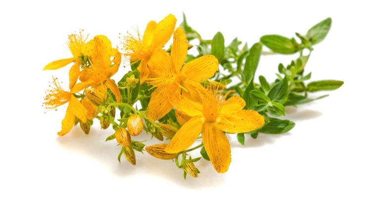 Industry Collaborates on Adulterated St. John's Wort Investigation