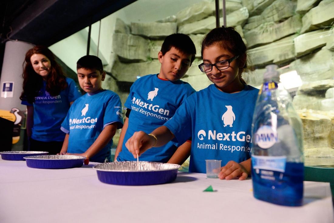 Dawn and Shedd Aquarium Launch STEM Curriculum