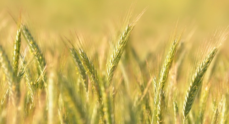 rye-seeds-fuel-silabs-latest-ingredient