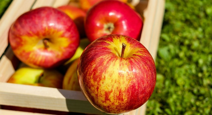Apple Waste Biomaterial Could Regenerate Bone and Cartilage