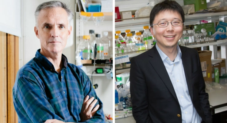 MIT professors James Collins (left) and Feng Zhang are co-authors of a new paper reporting that an RNA-targeting CRISPR enzyme can be harnessed as a highly sensitive detector able to indicate the presence of as little as a single molecule of a target RNA or DNA. (Credit: M. Scott Brauer (Collins) and Bryce Vickmark (Zhang))