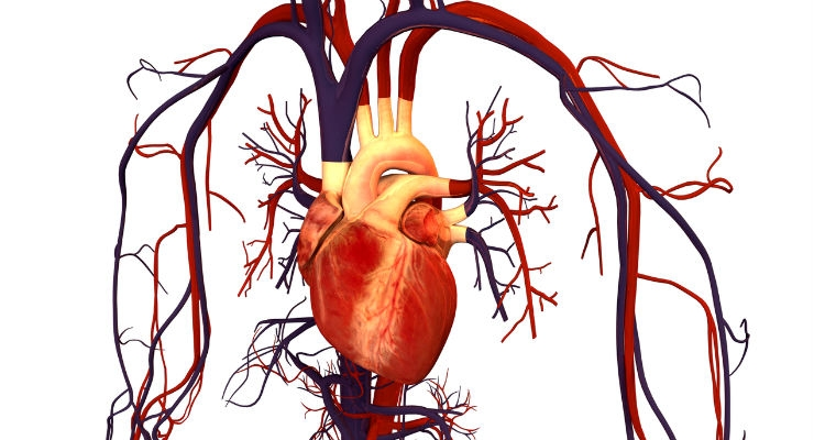 Study Shows High Success Rate for Robotic PCI Procedures