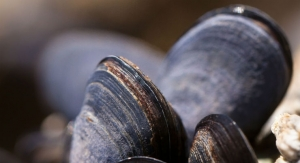 Mussels Add Muscle to Biocompatible Fibers