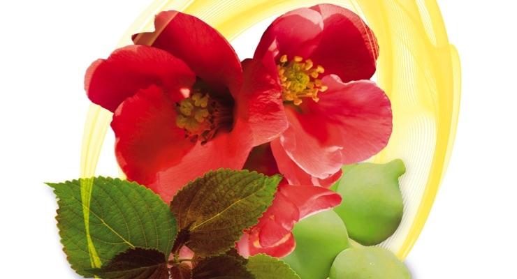 New Data On A Novel Botanical Active