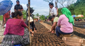 Frutarom Helps to Empower Women, Increase Annatto Crop