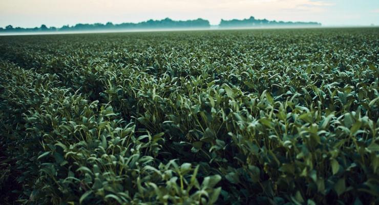 U.S.-Grown Soybean Oil Achieves FDA's Qualified Heart Health Claim