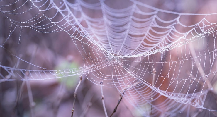 Cardiac Muscle Tissue Made of Spider Silk