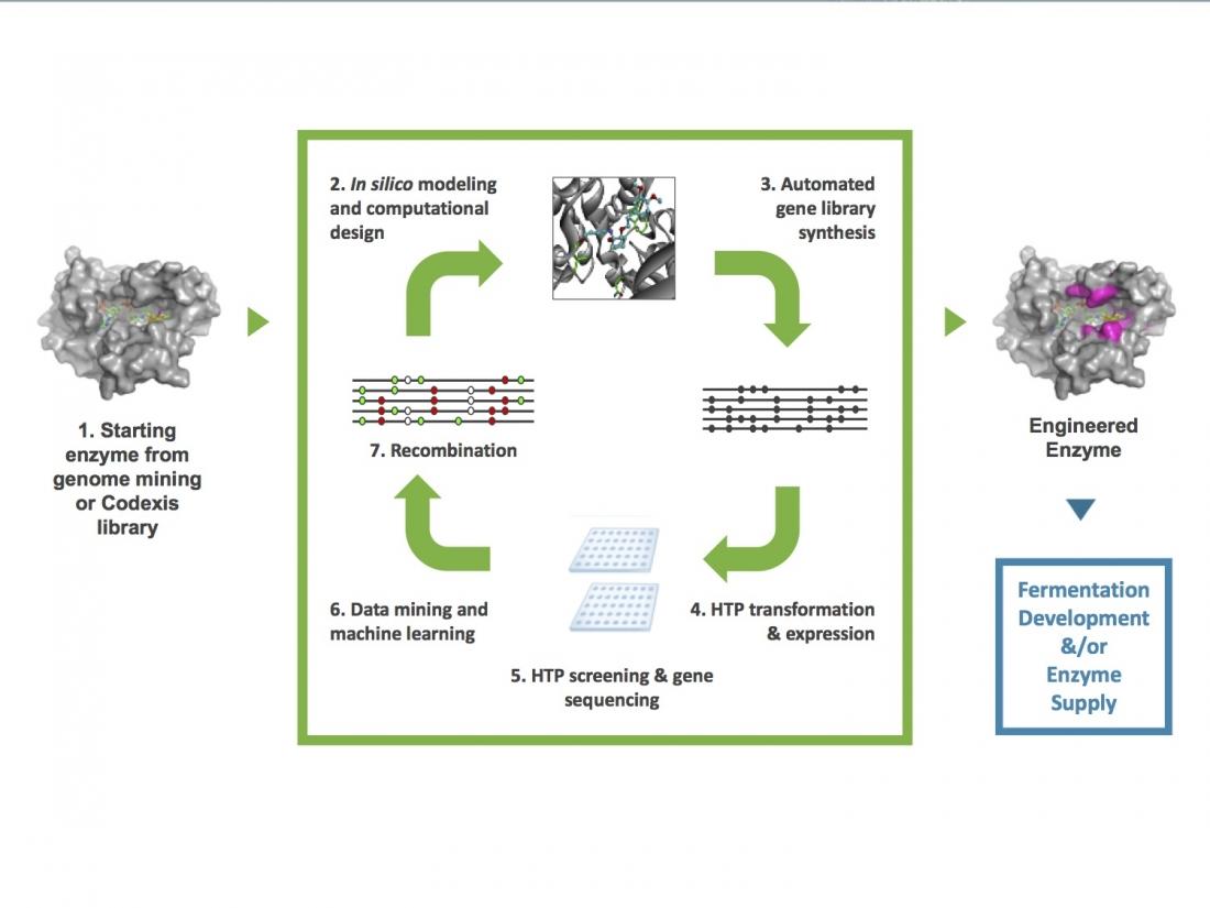 Biocatalysis for APIs