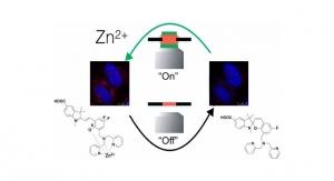Australian Researchers Develop New Zinc Sensor