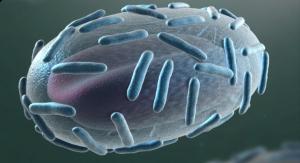 FDA Approves Emergent's Smallpox Vaccine