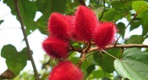 Annatto: Delivering Tocotrienols from Amazonia