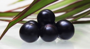 Organic Acai Berry Now Available from Natural Sourcing