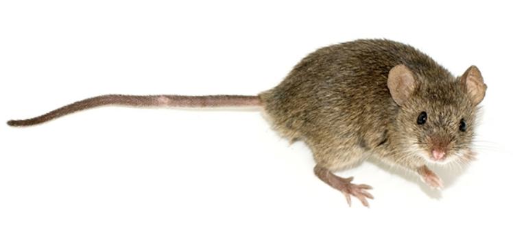 EU Parliament Demands Worldwide Animal Testing Ban
