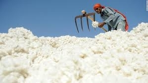 Indian Cotton Update
