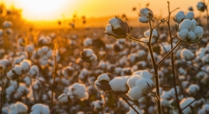 Texas Funds Cotton Research