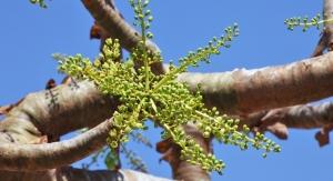 Botanical Research: Herbal Efficacy & Testing