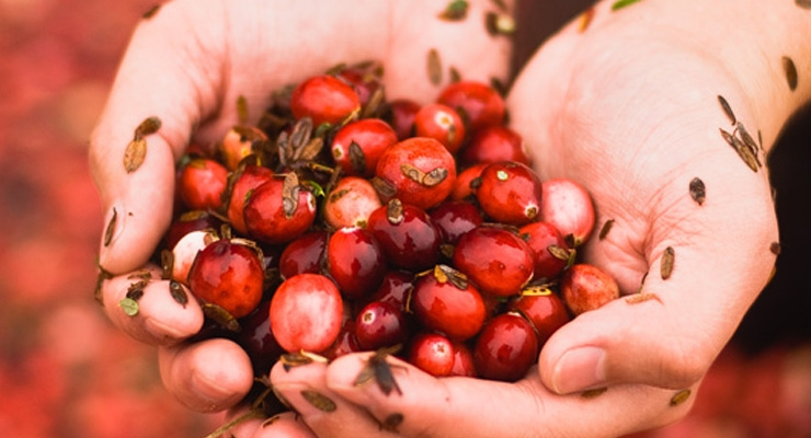 Cranberry Study Calls for More Accurate Cranberry Authentication Testing Methods