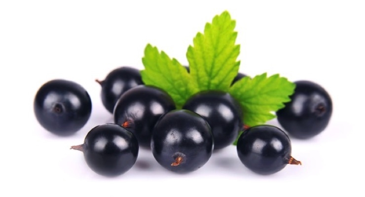 Frutarom Health Targets Sport Nutrition with Activeberry Performance Ingredient