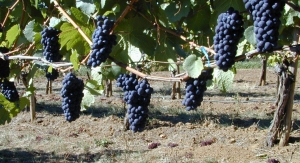 Polyphenolics Calls New Cholesterol Treatment Guidelines an