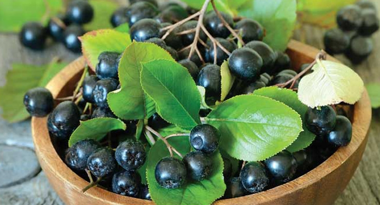 Artemis International to Promote Aronia Berry for Heart Health in 2019