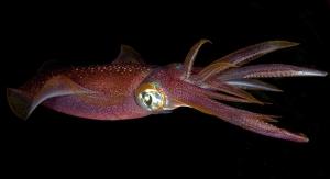 Plastic Problem? Look to Squid Inc.