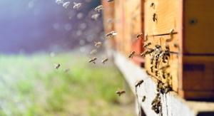 The desert-native ingredient used by vegan formulators and bee lovers.