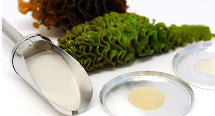 Seaweed Extract's Anti-Cancer Pathways Revealed through In Vitro Study
