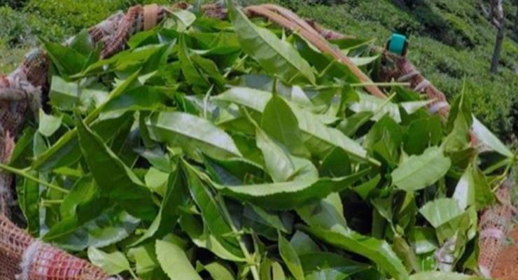 PurTea® Organic Caffeine