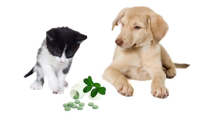 Pet Supplements: A Regulatory Briefing