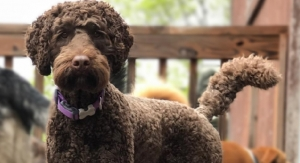 Ingredion Launches Plant-Based Ingredients for Pet Food