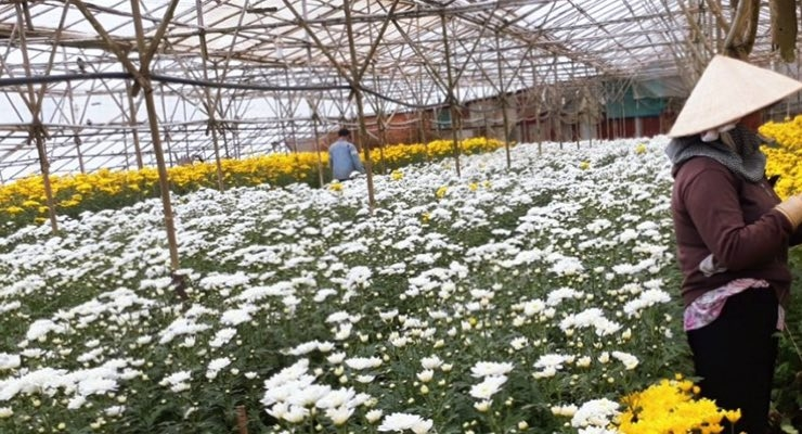 BASF's Light Stabilizer for Greenhouse Films Helps Vietnam Farmers Increase Yields, Reduce Waste