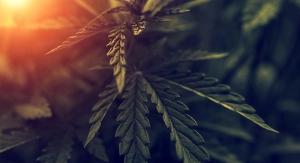 Sibelius Natural Products Forms Company to Investigate Cannabis Plant