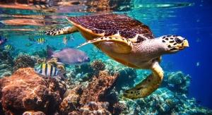 Raw Elements Helps Found 1st World Reef Day