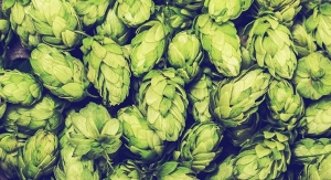 Synergy Flavors Introduces Authentic Hop Essences for Beverage Applications