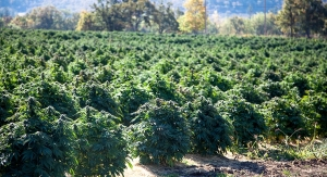 Layn Invests in U.S. CBD Production