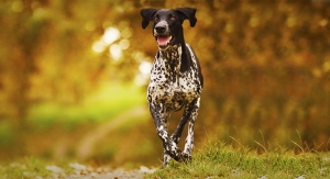 LifeSense Products Launches C8 MCT Oil for Dogs