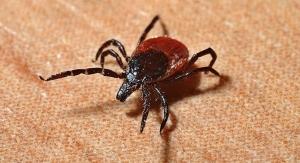 FDA OKs Streamlined Test Method for Lyme Disease