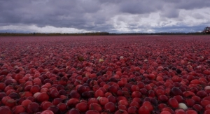 Cranberry Test Method Quantifies Insoluble PACs