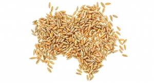 Rye May Stabilize Blood Sugar Levels and Decrease Cardiovascular Disease Risk