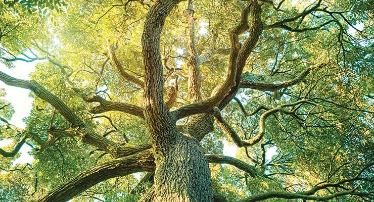 Forest Bathing? New Trends Impact Spa Sales