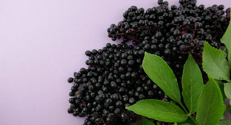 Certification Authenticates Identity of INS Farms' Black Elderberry