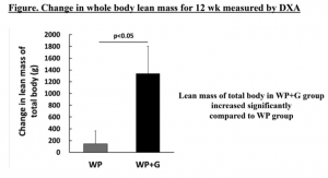 Amino Acid GABA & Whey Protein Shown to Bolster Muscle Growth