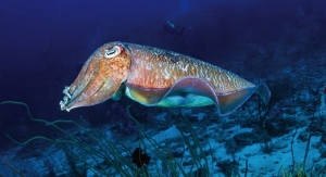 Oral Care Composition Has Cuttlefish Bonepowder