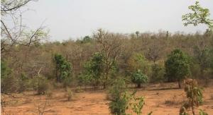 Verdure Collaborates to Sustain Boswellia Serrata